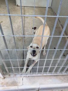 Arme Hunde In S 252 Ditalienischem Tierheim Suchen Dringend Liebevolle Pl 228 Tze Animal Spirit At