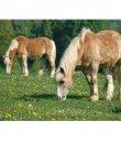 Billet Pferde Susi&Fritzi
