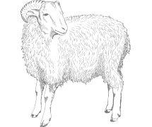 Zitatbild Ziegenbock