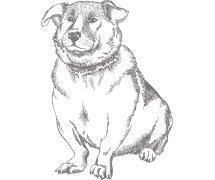 Zitatbild Hund