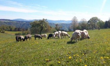 Sommeridylle für unsere Schafe..........;