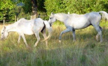 Benni & Chico auf der neuen Engelberger Weide