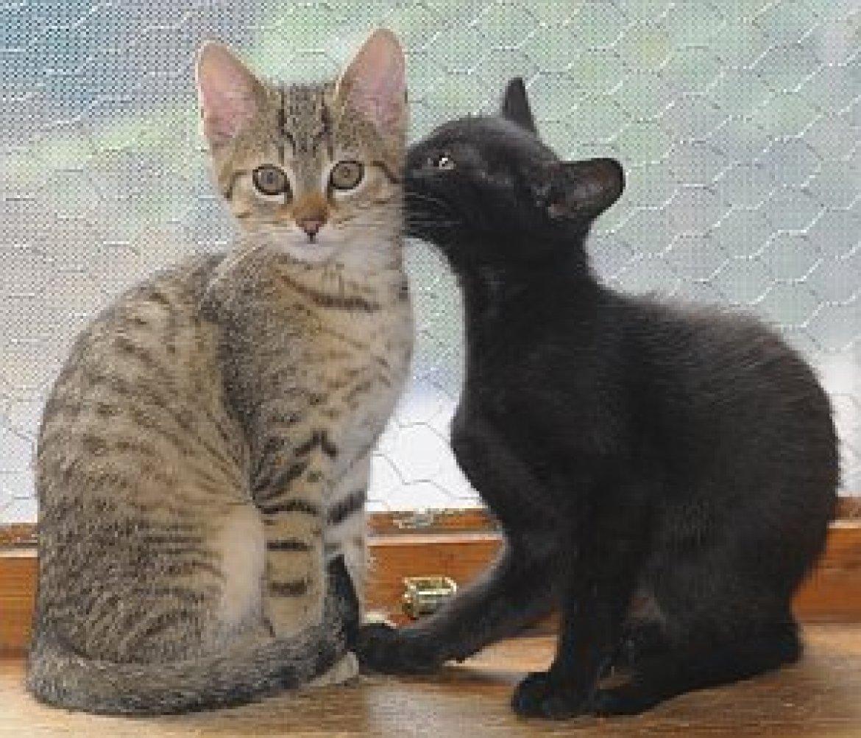 Zitate Alexander Von Humboldt Süße Katzen Kinder Videos Animal