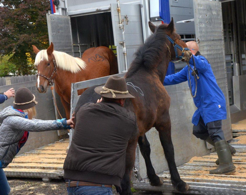 Schlachthof Für Pferde