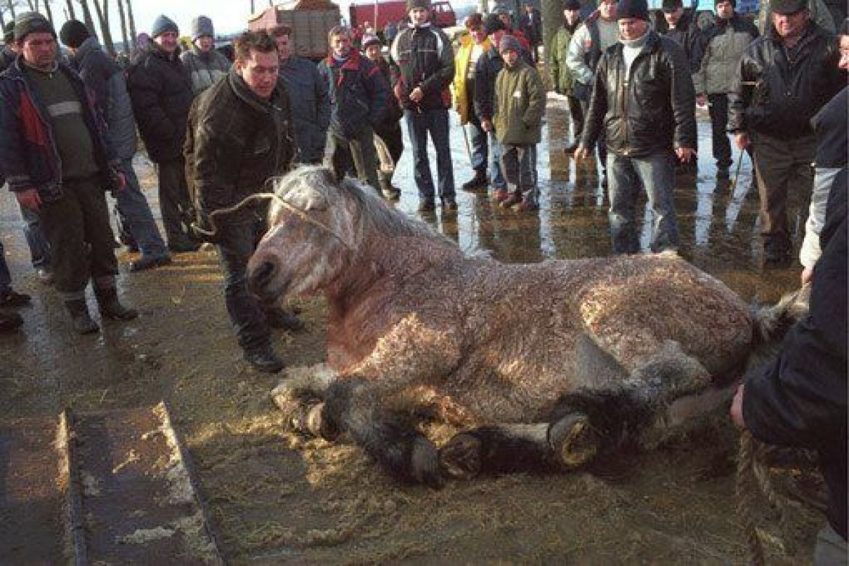 "Petition ""Stoppt Pferdemarkt in Skaryszew/Polen"" | animal-spirit.at"