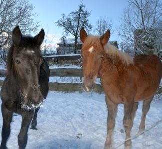 Jim & Joe - im Winter am Gnadenhof Esternberg